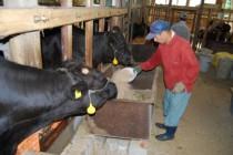 和牛の飼育にも取り組んでいます。コシヒカリ、ヒノヒカリ、もち米などを作っています。